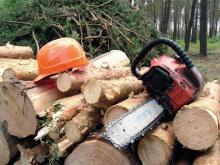 Гражданам - о заготовке древесины для собственных нужд