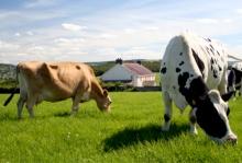 2014 год объявлен Годом семейных фермерских хозяйств  в Кировской области