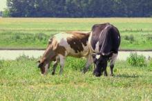 Объявлены конкурсы по отбору крестьянских (фермерских) хозяйств для предоставления грантов из областного бюджета