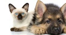 Правила содержания собак и кошек  необходимо выполнять всем владельцам домашних питомцев