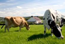 2016 год в Кировской области объявлен  Годом крестьянских (фермерских) хозяйств