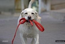 Соблюдайте правила содержания собак!