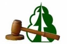 Приём заявок на участие в аукционах по продаже права на заключение договора купли-продажи лесных насаждений