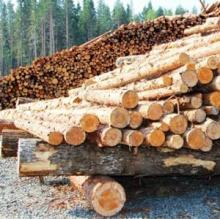 Информирование об обязательной постановке на учет пунктов приема и переработки древесины на территории Кировской области