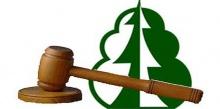 В феврале пройдут аукционы по продаже права на заключение договора купли-продажи лесных насаждений