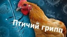 Внимание - грипп птиц!
