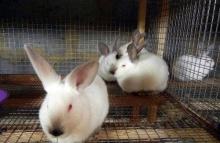 Вниманию владельцев кроликов жителей Унинского района