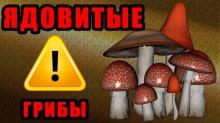 Внимание! В связи с участившимися случаями отравления грибами напоминаем о мерах профилактики