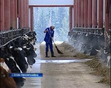 В селе Елгань Унинского района открыли новый животноводческий комплекс (ВИДЕО ГТРК ВЯТКА)