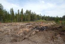 100 миллионов рублей поступило в бюджет области от лесных аукционов за 1 квартал 2019 года
