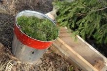 Более 160 претензий направлено арендаторам за неполное выполнение работ по лесовосстановлению