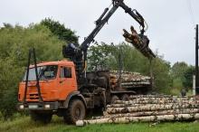 Более 650 миллионов рублей поступило в бюджет области от лесного комплекса за I квартал