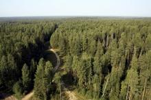 В Кировской области создано движение общественных лесных инспекторов