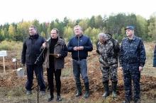 60 тысяч сеянцев хвойных деревьев посадят в Слободском лесничестве