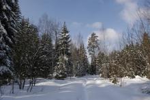 В преддверии новогодних праздников в регионе усилят охрану хвойных деревьев