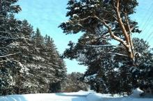 14,7 млрд рублей направят на развитие лесного хозяйства Кировской области