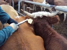 Маркирование и идентификация животных