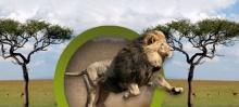 """Интернет площадка """"Животный мир"""""""