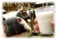Мероприятия по профилактике заразного узелкового дерматита крупного рогатого скота