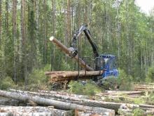За полгода в бюджет региона поступило более 1,4 млрд рублей от лесного комплекса