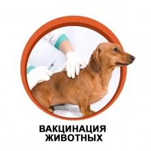 Уважаемые владельцы собак и кошек!