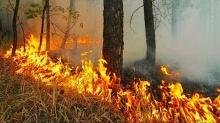 За прошедшие сутки в Кировской области зарегистрировано 2 лесных пожара